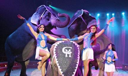 Socios APM: sesiones muy rebajadas en el Circo de Hielo, Circo Price, Circo Mundial y Mago Pop